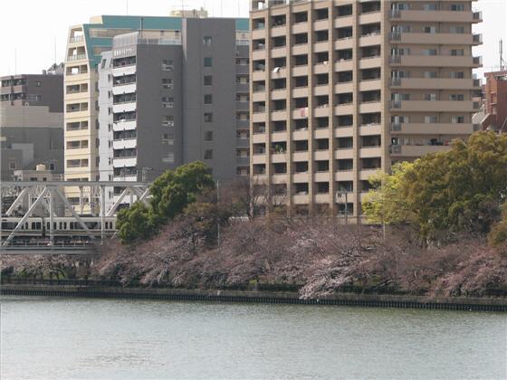 sakuranomiya_09.jpg
