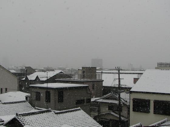 snow20080209.JPG